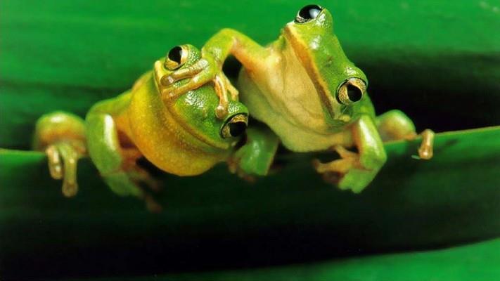 К чему беременной снятся лягушки фото