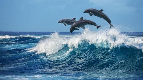 к чему снится океан волны