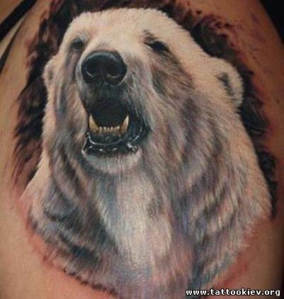 Медведи белые и бурые, медведь татуировка, панда