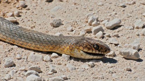 к чему снятся мертвые змеи женщине