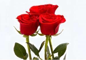 Снятся красные розы