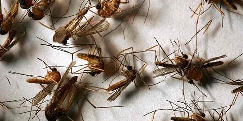к чему снится убивать насекомых