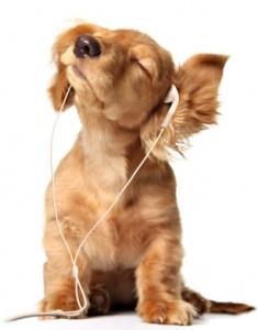 собака сонник