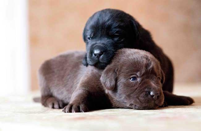 Сонник собака родила щенков фото