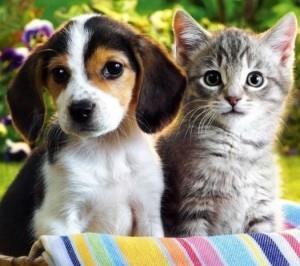 Фото Сонник собака родила щенков