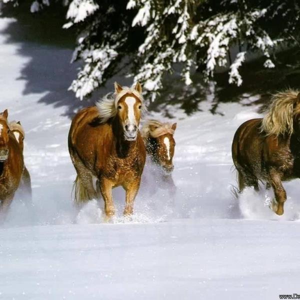 Фото Убегать от лошади во сне что означает
