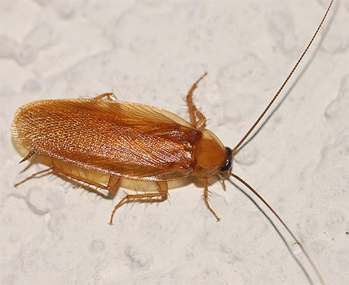 Фото К чему снятся тараканы в ванной