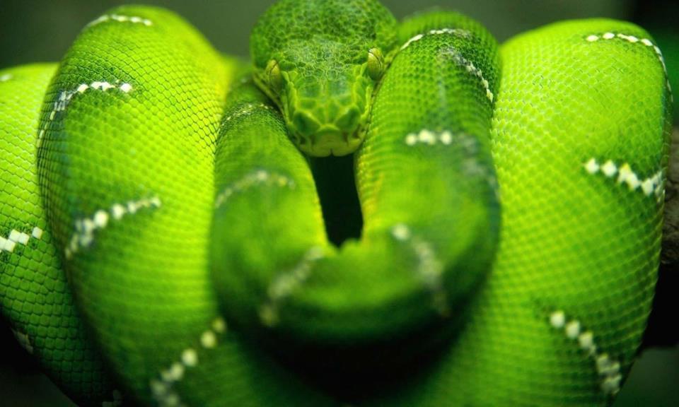 К чему снятся змеи?