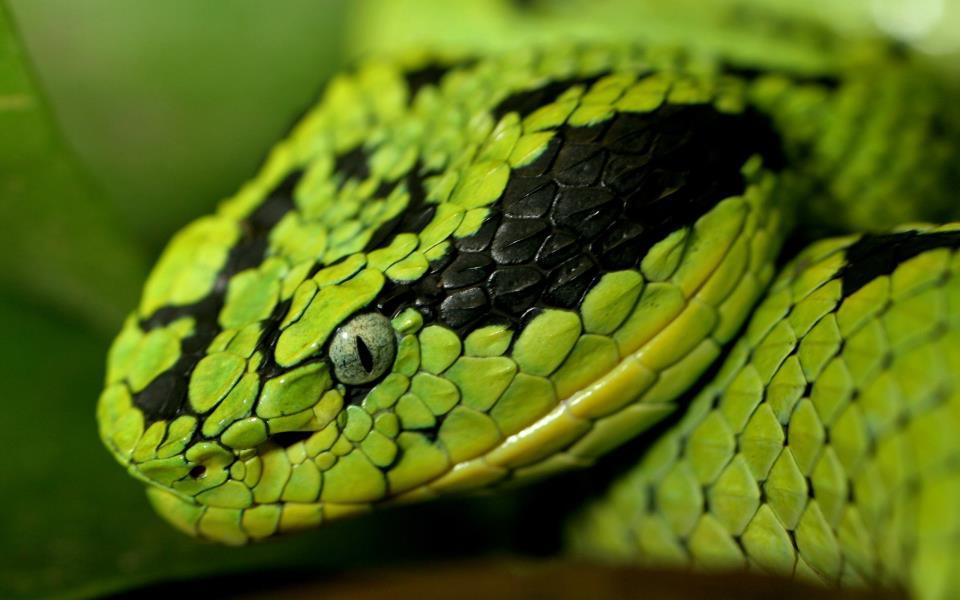 Змеи во сне. Что это значит?