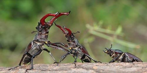 Фото К чему снятся жуки в квартире