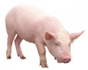 снится свинья