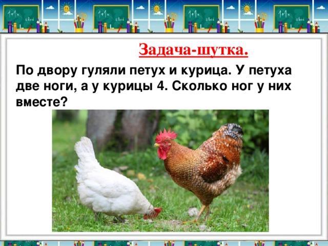 к чему снится петух и цыплята