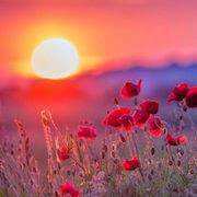 К чему снится яркое солнце?