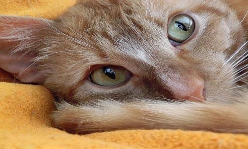 К чему снится грязный кот фото