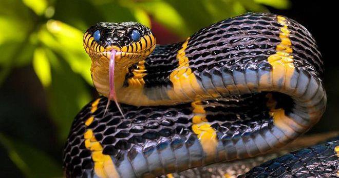 Сонник - змея и толкование снов со змеей