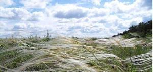 Сильный ветер
