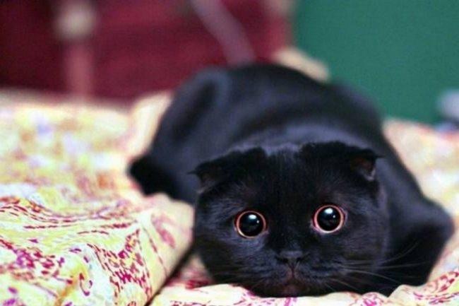 Черный кот лежит на кровати