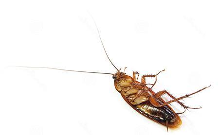 Если приснился мертвый таракан