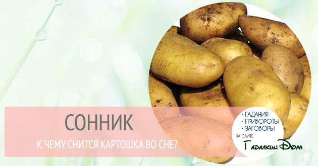 К чему снится картошку украли фото