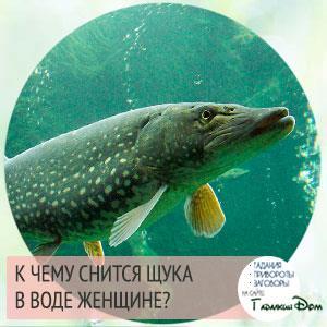 Фото К чему снится рыба щука женщине