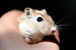 Ловить мышей